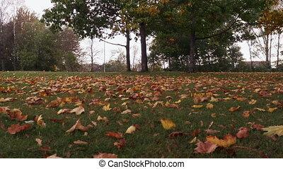 Season, autumn, falling leaves in the park.