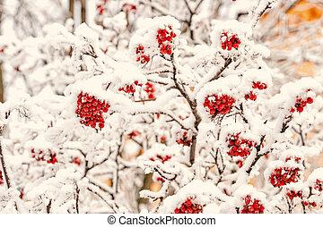 Season greetings and holidays celebration