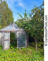 Season of a crop - apples in a garden and a hotbed