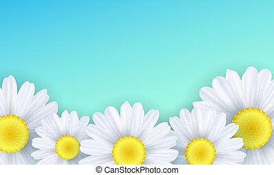 Seasonal background. Camomiles flowers on a green background. Vector illustration