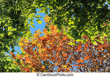 seasonal changes, abstract nature background