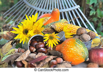 seasonal fruit picked in the garden - seasonal colorful...