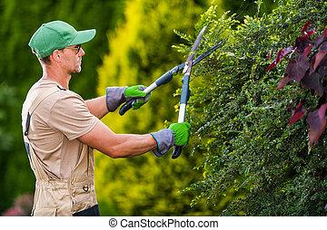 Seasonal Garden Plants Trimming by Caucasian Gardener