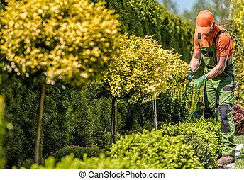 Seasonal Garden Plants Trimming Job
