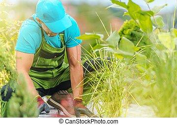 Seasonal Garden Work