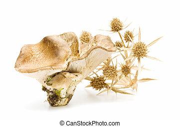seasonal mushrooms