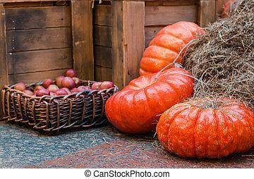 seasonal pumpkin harvest on straw market selective focus