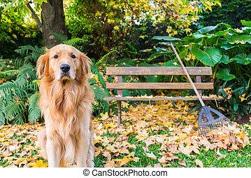 Seasonal Scene, Cute dog autumn, October, Novembre. Beautiful Ga