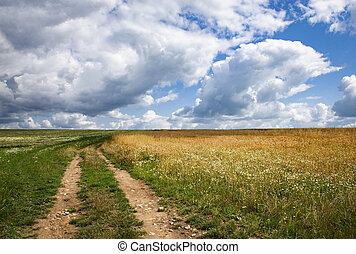 Landscape wide meadow with path