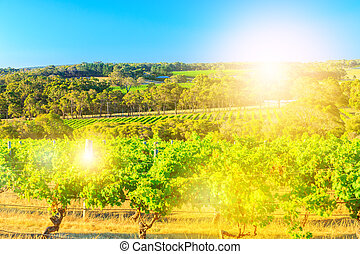 Seasonal vineyard landscape