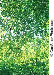 seasons, природа