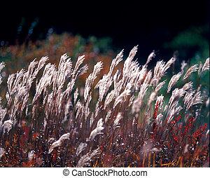Seasons of Nature