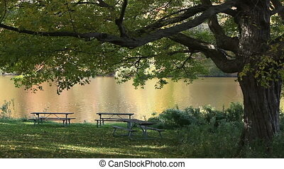 Old oak loosing leaves above empty picnic tables in autumn park with fall reflections in the river