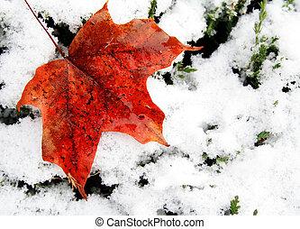 Seasons - Red autumn leaf laying on fresh fallen snow