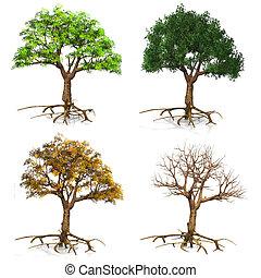 seasons  trees