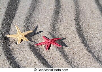 Seastar close up image