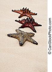 Seastar in the sand