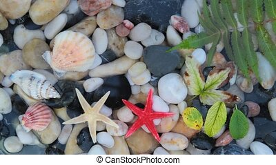 Seastar, pebble stones ,seashell - Star fishes, pebble...