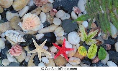Seastar, pebble stones ,seashell - Star fishes, pebble...