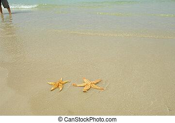 seastar sitting on beach