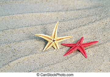 Seastar on beach sand