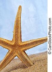 seastar - closeup of a seastar on the sand
