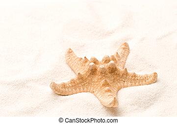 Seastar in sand