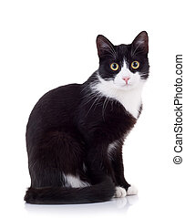 seated cat looking at the camera