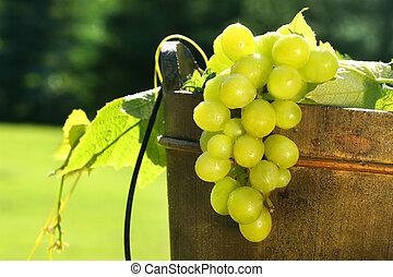 seau, raisins, vin