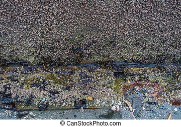 Seawall With Barnacles - A closeup shot of a seawall wint...