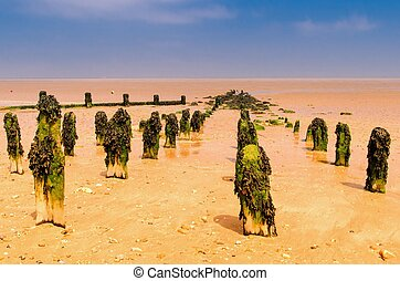 seaweed covered posts