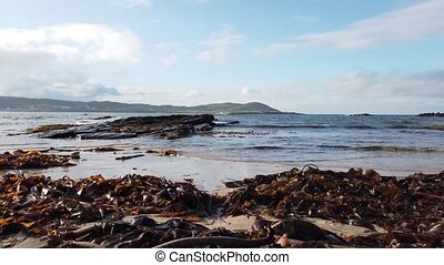 Seaweed laying on the beach in County Donegal - Ireland.