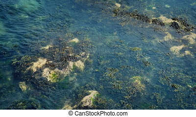 Seaweed Moving Around In The Sea - Thick seaweed in ocean...