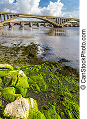 Seaweed on a rock under the bridge in Berwick-upon-Tweed