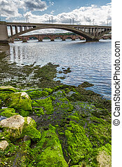 Seaweed on a rock under the bridge in Scotland