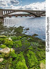 Seaweed on a rock under the bridge in Scotland