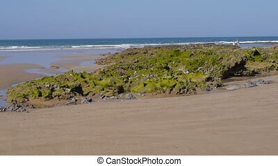 seaweed on beach at low tide