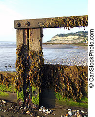 Seaweed on Post, Isle of Wight
