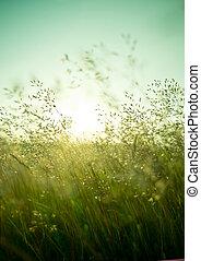 sec, été, herbe