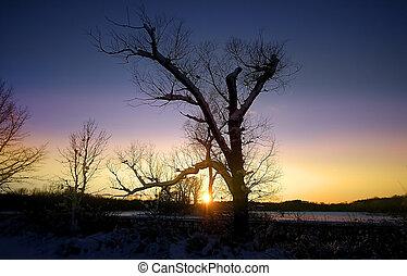 sec, arbre, ciel, coloré