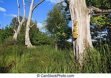 sec, arbre, jaune, champignon