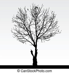 sec, arbre, mort