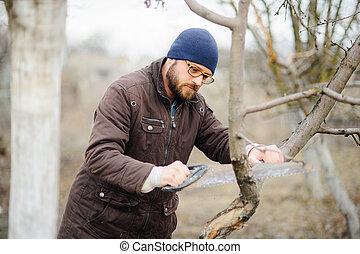 sec, barbu, branches, arbres., scies, jeune, fruit, homme
