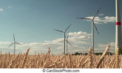 sec, blé, beaucoup, turbines, champ, vent