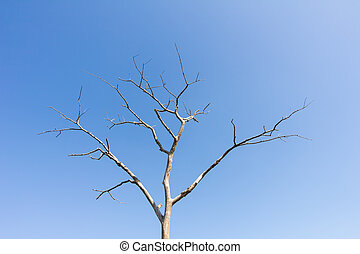 sec, bleu, arbre, feuilles, ciel, contre, sans
