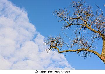 sec, bleu, branches, ciel, arbre, contre