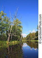 sec, bois, arbre, lac, côte