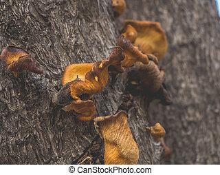 sec, champignons, arbre., haut fin