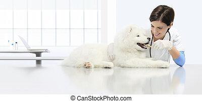 sec, chien, concept, examen, nourriture, vétérinaire, vétérinaire, régime, forme, vétérinaire, animal, clinique, table, sourire, kibble, os