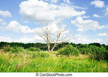 sec, ciel bleu, contre, arbre